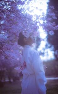 【闪耀女生】雪与樱…问世间情为何物………,爱摄影-荣耀俱乐部