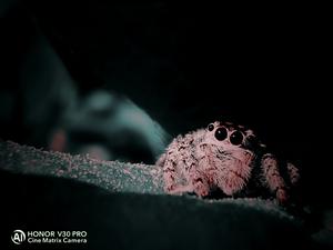 八目神将:跳蛛,爱摄影-荣耀俱乐部