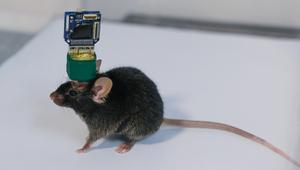 资讯丨意念控制不再是梦?国内首款无线脑机接口芯片9月投入商用!,爱数码-荣耀俱乐部
