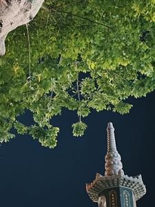 摄影   荣耀V40轻奢版带你去探秘:说这是宫崎骏动画的千与千寻梦境,没人反对吧?,爱摄影-荣耀俱乐部